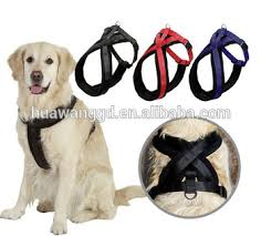 Body belt for dogs